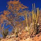 Desert Landscape by Roupen  Baker
