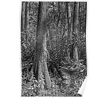 Leather Fern Portrait #2. Shingle Creek. Poster