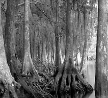 Shoreline. Shingle Creek. by chris kusik