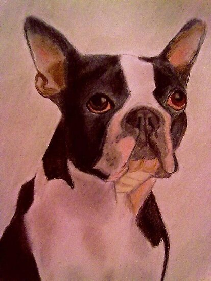 Boston Terrier by DianeL
