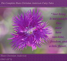 Swirls of Cheerfulness ~ Bachelor's Button by JETAdamson