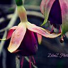 Beauty In Imperfection by Zoe Harris