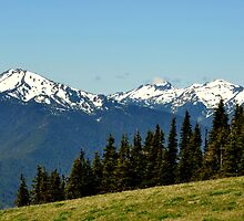 """Olympic National Park High Country"" by Lynn Bawden"