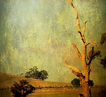 """The dead tree"", from the book, ""Daylesford Days"", by Chris Armytage by ArmytageArts"