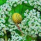 Queen of Snails Enthroned on Anne's Lace by Mary-Elizabeth Kadlub