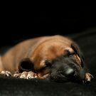 sleeping puppy (landscape) by vannphotography