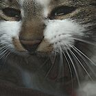 Smile of a cat by flashcompact
