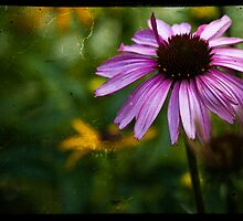 Pink Coneflower summer 2012 by KSKphotography