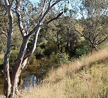 Sugarloaf Creek Broadford Vic Australia (2) by Margaret Morgan (Watkins)