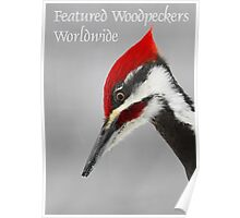 Featured Woodpeckers Worldwide Poster
