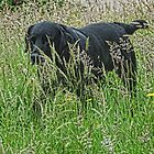 Jake In Grass by lynn carter