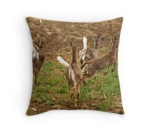 Four Whitetails at Holy Hill Throw Pillow