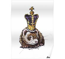royal ferret Poster