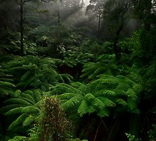 Break On Through... - Black Spur, Victoria, Australia by Sean Farrow