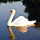 Swan on the Pond by Jimmy Taylor