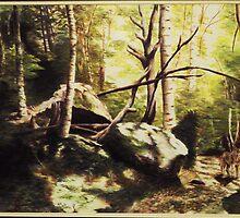 Wolf in the Woods by Vanessa  Soaring Souls Hawk Kell