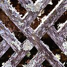 Abstract of Lichen on Lattice  by Marilyn Harris