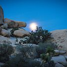Moon setting, Joshua Tree by Philip Kearney