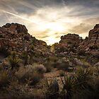 Sunrise, Joshua Tree by Philip Kearney