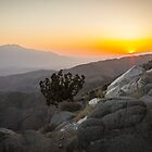 Watching the Sunset, Joshua Tree by Philip Kearney