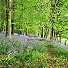 bluebells by mark tabrett