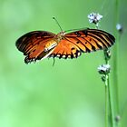 Gulf Fritillary by freevette