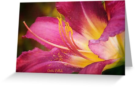Painted Daylily by Anita Pollak