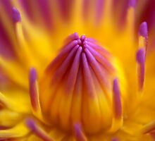 Purple and Yellow by Rainy
