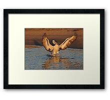 PELICAN MARLO VIC. Framed Print