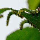 Garden Caterpillars by DMontalbano