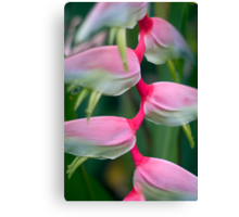 Alluring Sexy Pink and Greens  Canvas Print