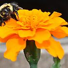 Wasp on Flower by Laurast