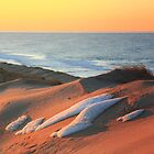 Beach Dunes on a Winter Day by Roupen  Baker