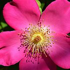 Pretty PInk Flower by TheBluePlanet