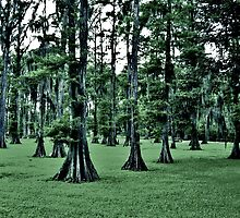 Dark Cypress by jasmith162
