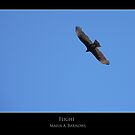 Flight - - Posters &amp; More by Maria A. Barnowl