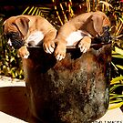 Boxer Puppy Bookends by Tawnydal