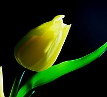 Pasion of yellow by ivettya