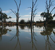 The wet-lands near Barmera, South Australia. by elphonline