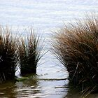 Grasses on the shore of Roanoke Sound by Paula Tohline  Calhoun