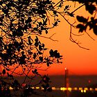 Golden Gate Sunset Through the Trees by missk8