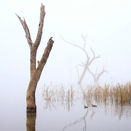 Tree fingers - Lake Mulwala by Hans Kawitzki