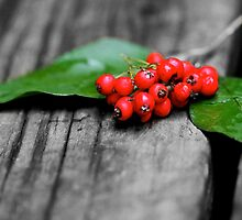 Red Berries by Kate Halpin