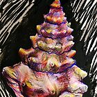 Seashell by Monica Reuman