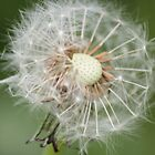 dandelion in the breeze by michael jewkes