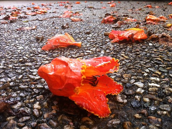 Fallen Flowers in the Drive by amgmcpherson