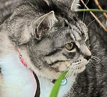Cat Looking at something in Garden by alanball