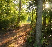 Pathway by David Lamb
