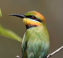 Rainbow Bee-eater by mosaicavenues