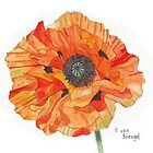 Single Orange Poppy by Esmee van Breugel